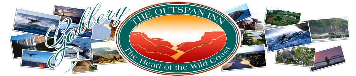 Gallery - The Outspan Inn, The Heart Of The Wild Coast