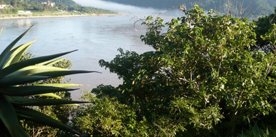 Lush vegetation on the banks of the Mzimvubu River